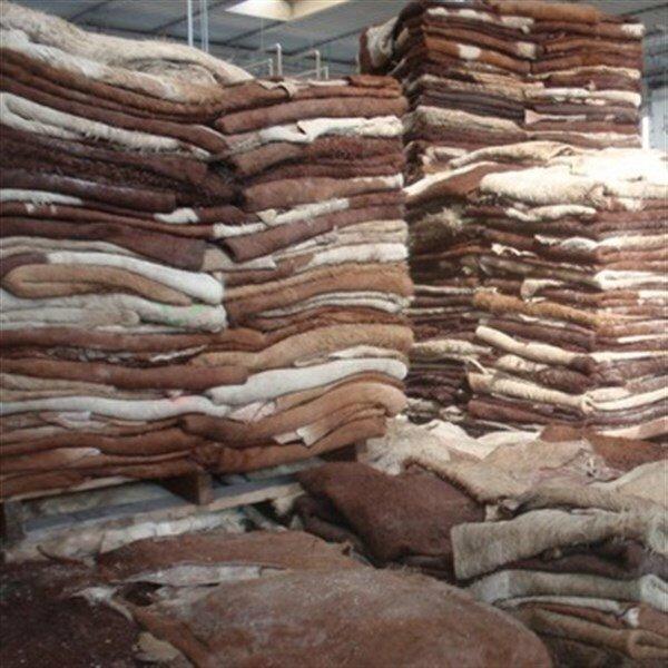 Couro de vaca seco com sal para exportação - Scandsticks AS